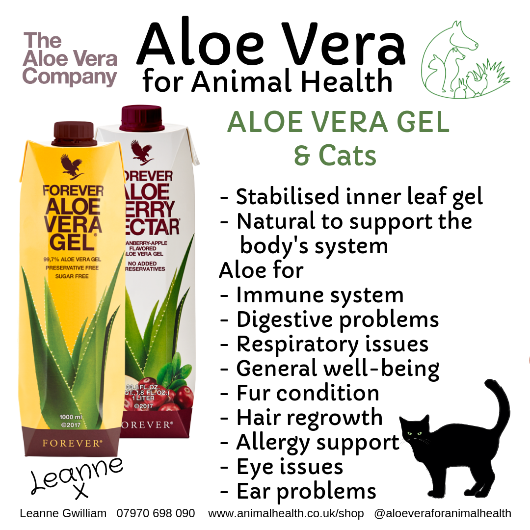 aloe_vera_for_cat_health_wellness_digestion_skin_immune_system.png