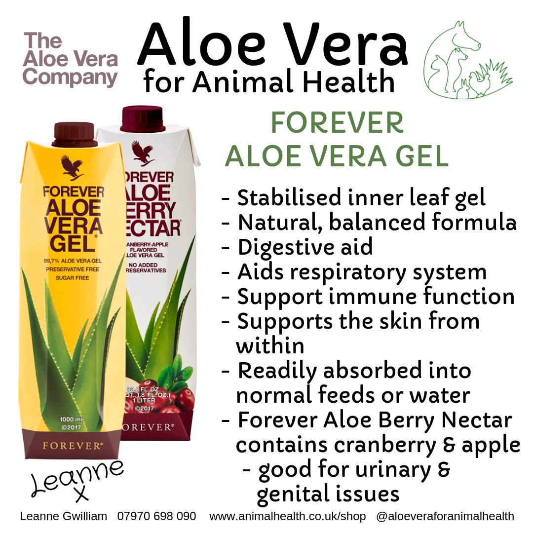 aloe_vera_for_digestive_health_and_immune_system.png